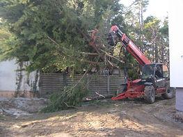 Evacuation d'arbres - Broyage Noeppel