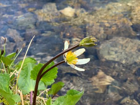 Kom foråret i møde med Loving Kindness
