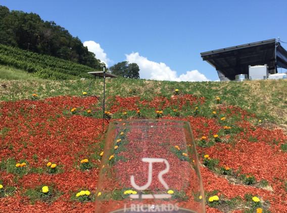 J Rickards ~ Geyserville