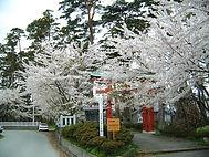 椎崎諏訪神社能舞台 桜 椎崎温泉