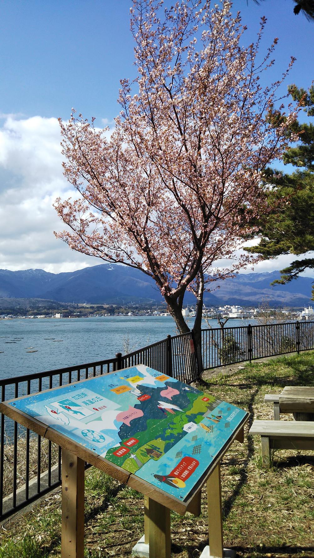 椎崎公園 椎崎諏訪神社 桜 加茂湖展望の丘
