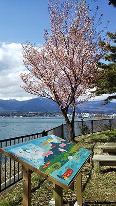 加茂湖展望の丘 椎崎桜 桜の名所 未来桜 両津未来をを考える会