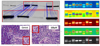 Proofig analyze detection of scientific Image duplication  publications.png