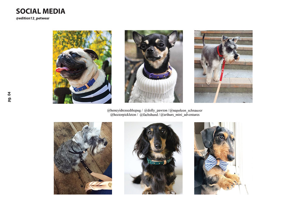 designer dog collars five