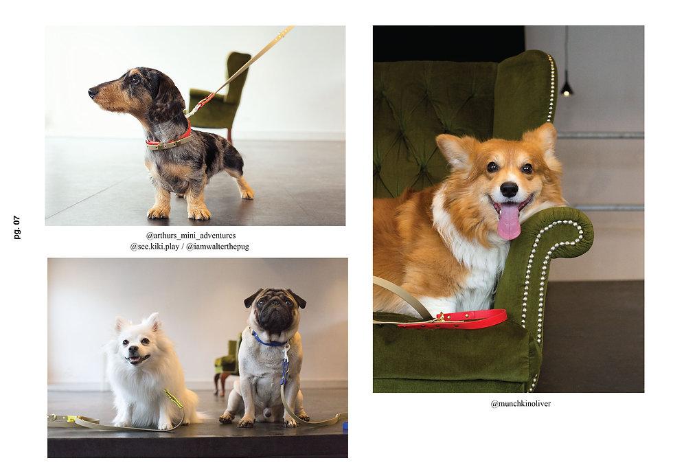 designer dog collars seven