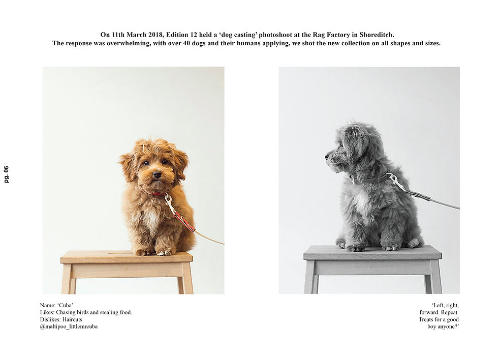 designer dog collars six