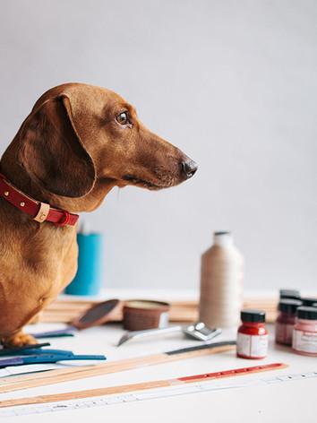 designer dog collars eight