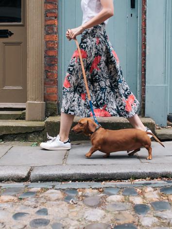 designer dog collars eleven