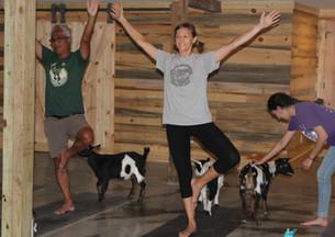 Goat Yoga Pose