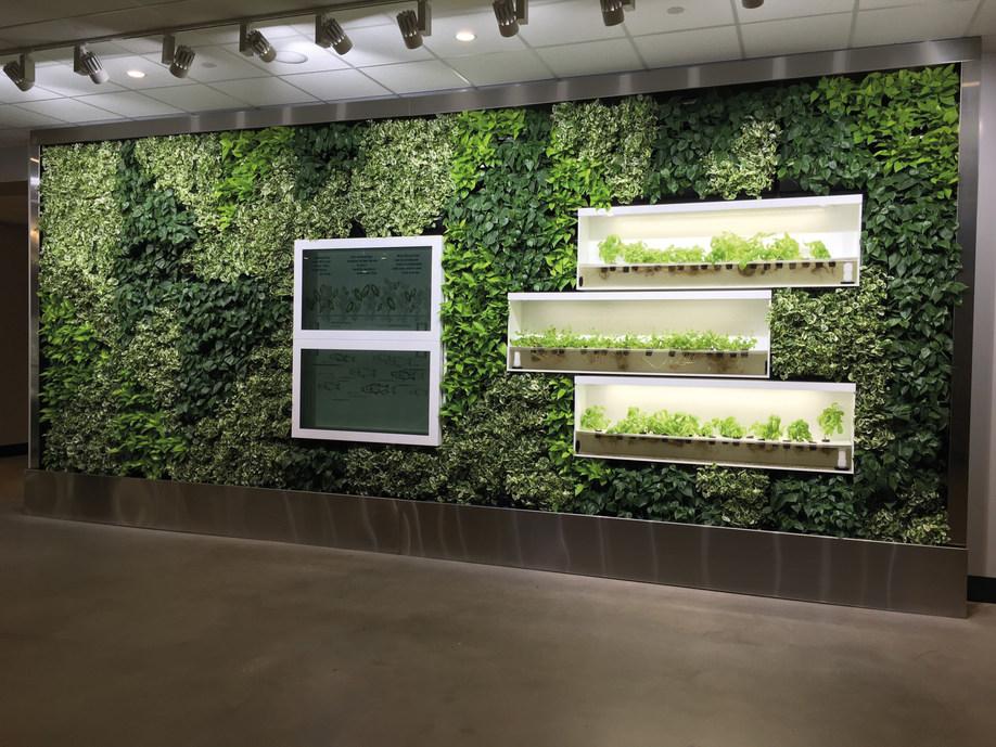 NextGen-Living-Walls Pflanzenwand