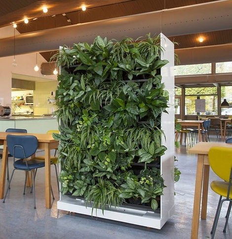 NextGen Raumteiler, Baumhaus, Wandbegrünung, Moos, Baumhaus, NextGen Living Walls sind Pflanzwände aus Echtpflanzen. Vertikale Begrünung, Begrünte Wände, Living Green Walls, Raumbegrünung Pflanzenpflege, NextGen Living Wall bei BAUMHAUS, https://baumhaus.de, Wandbild, Living green, vertikale Begrünung, Nextgen Picture, NextGen Living Wall bei BAUMHAUS, https://baumhaus.de, Wandbild, Living green, vertikale Begrünung, Nextgen Picture