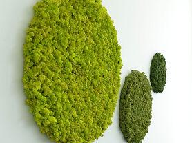 Moosbilder Islandmoos rund springgreen, Moos, Moosbild