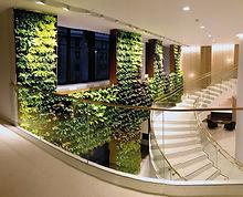 Wandbegrünung, Raumbegrünung, Pflanzenpflege, NextGen-Living-Walls, begrünte Wände, cleveres Begrünungssystem, vollflächige Wandbegrünung
