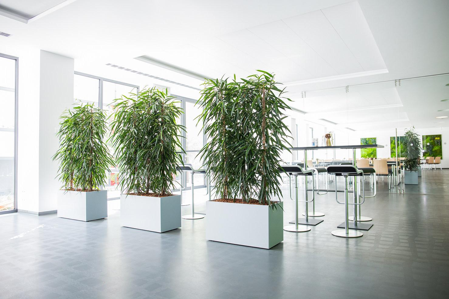Baumhaus Raumteiler
