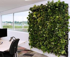 Raumbegrünung, Baumhaus, Wandbegrünung Grüne Wände vertikales Grün
