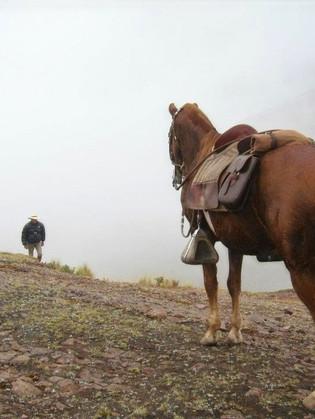 Equestrian travel
