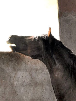 Horses can 'read' us like a book