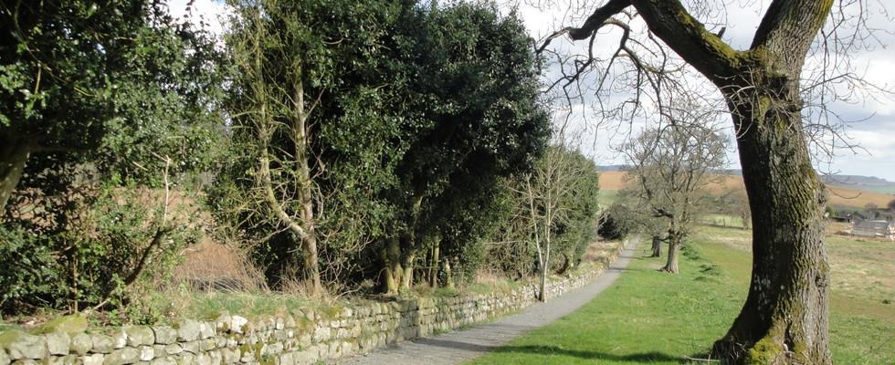 Holly Tree Walk