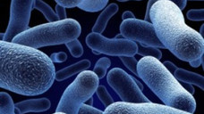 โปรไบโอติกส์ (Probiotics) ทางเลือกใหม่ในการรักษาโรคสะเก็ดเงิน และ โรคผิวหนังอักเสบมาจากข้างใน
