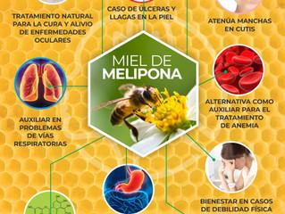 BENEFICIOS DE LA MIEL MELIPONA