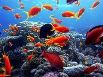 Ras Mohamed National Park_Travel Egypt Tours