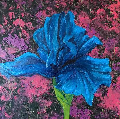 One Blue Iris