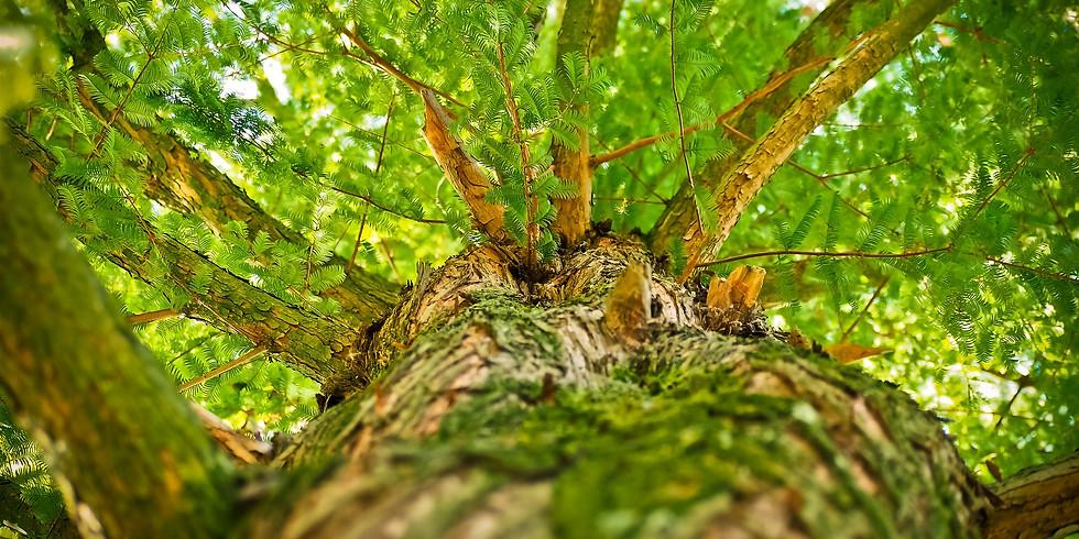 Sophro-balade en Forêt