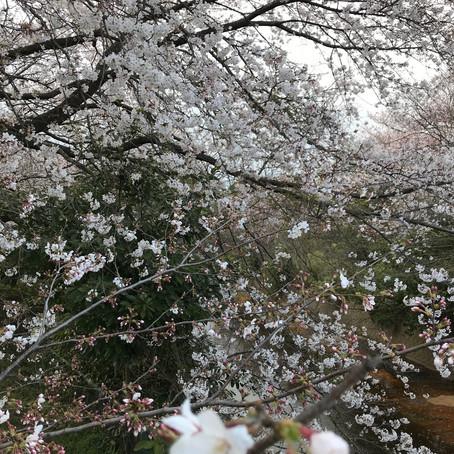 春の気温差に月曜ヨガがおすすめな理由の1つ