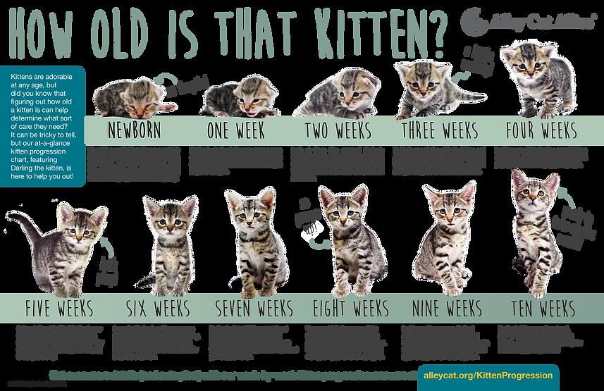 Kitten-Progression-FINAL.png