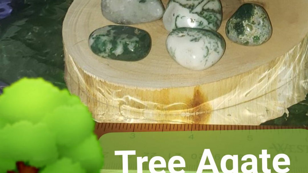Tree Agate large one piece