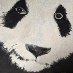 Bamboozled Panda