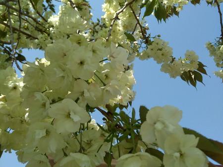 【コロナ禍】でも春が来ました。