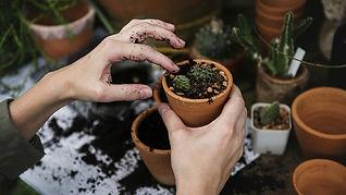 Plant pots - Pest Control Environmentally Friendly