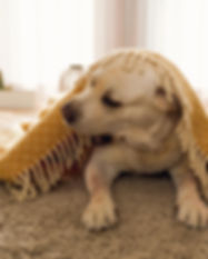 Rancho-Cordova-Carpet-Cleaning-Pet-Stain