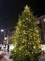 Tree XmasBall.jpg