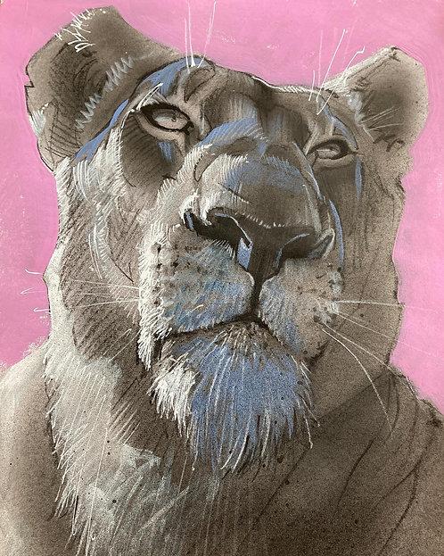 Lion gris sur fond rose - Original