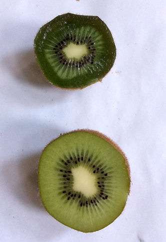 differenza kiwi con e senza quantum freebioenergy