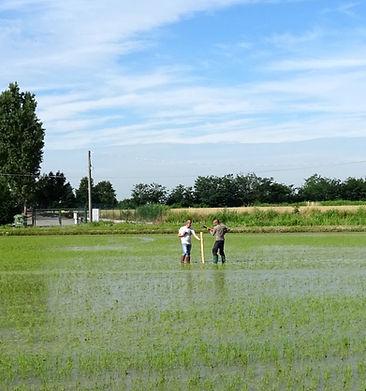 insrtallazione quantum freebioenergy su riso
