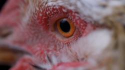 Through Their Eyes - Documentary Series