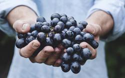 Grapes_Closeup_Hands_460868_3840x2400