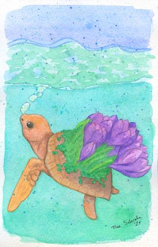 Schildkröte 800.jpg