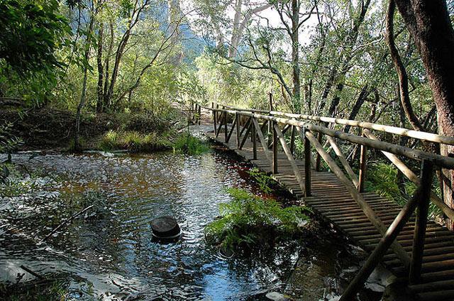Kirstenbosch---landscape3.jpg