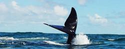 Hermanus---whale-watching-3.jpg