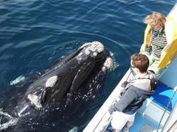 Hermanus---whale-watching-2.jpg