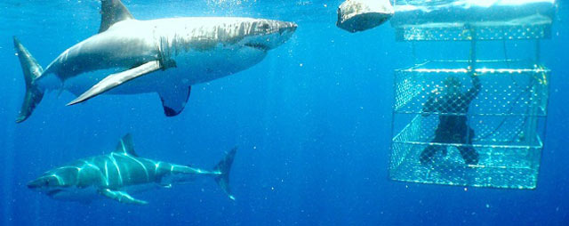 Shark-Cage-Diving---Gansbaai-2.jpg
