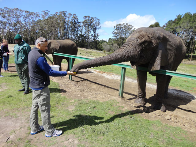 Knysna---Elephant-Sanctuary-2.jpg
