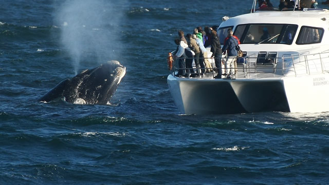 Hermanus---whale-watching.jpg