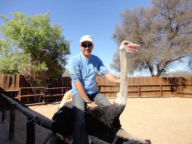 Oudtshoorn---Ostrich-Farm-4.jpg