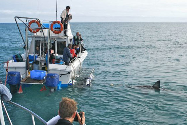 Shark-Cage-Diving---Gansbaai-3.jpg