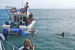 Shark-Cage-Diving---Gansbaai-3.jpg